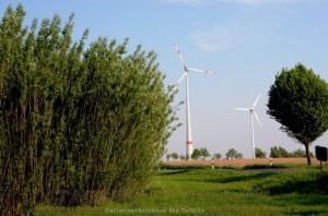 Weidenplantage und Windräder
