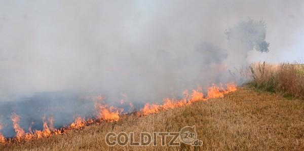 Feldbrand zwischen Collmen und Colditz