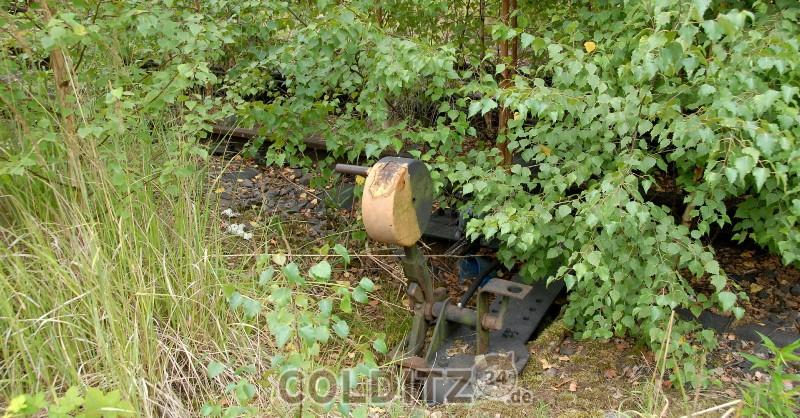 Colditz stellt Weichen...
