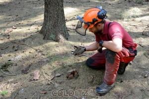 Das Werk der Borkenkäfer ist schon am Boden sichtbar