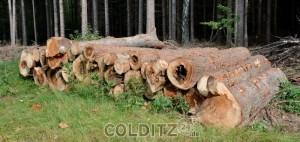 Nur noch Brennholz...