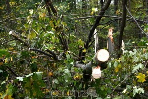 Sturmschaden auch im Tiergarten