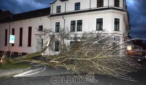 Umgestürzter Baum auf dem Sophienplatz