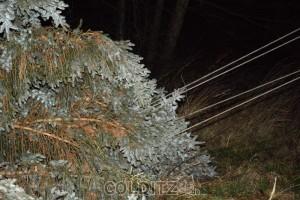 Stromausfall in Erlbach - ein Baum stürzte in die Freileitung