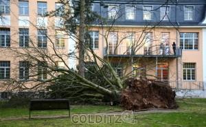 2 Bäume stürzten Richtung B 20