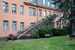 Umgestürzte Bäume an der B 19