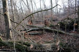 Schäden nahe der Waldmühle