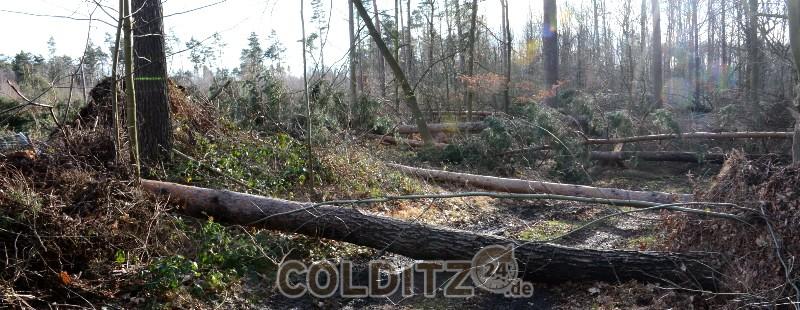 Gefährliche Wege im Colditzer Wald