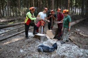 Azubis  im Kampf gegen den Borkenkäfer, nun ruft Friederike