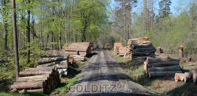 Holzstapel an Holzstapel