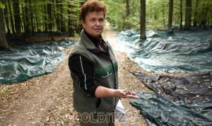 Saatgut für unseren Wald