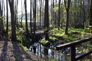 Der Tiergartenbach - Biber nutzen das Geäst zum Dammbau