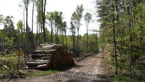 Einst beliebte Wanderwege im Colditzer Wald