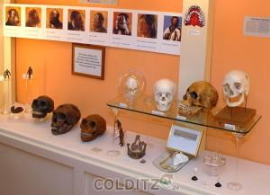 Das Dentalhistorische Museum in Zschadraß