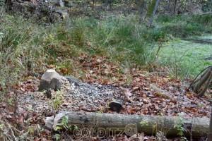 Holzarbeiten am Teich - Balken für das Lusthaus