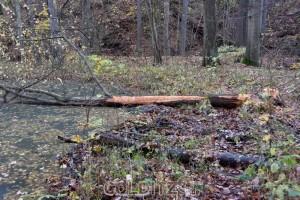 Baumfällarbeiten an den Hältern
