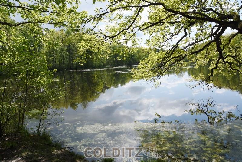 Unsere herrliche Landschaft soll erhalten bleiben - am Altteich im Colditzer Wald