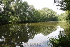 Im Waldstück in der Senke vor Leisenau  - ein idyllischer Teich