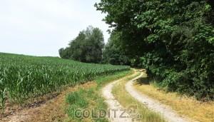 Landwirtschaftliche Nutzflächen - wie lange noch ?